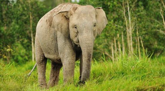 Hewan Langka di Indonesia dan penyebab punahnya  igissone