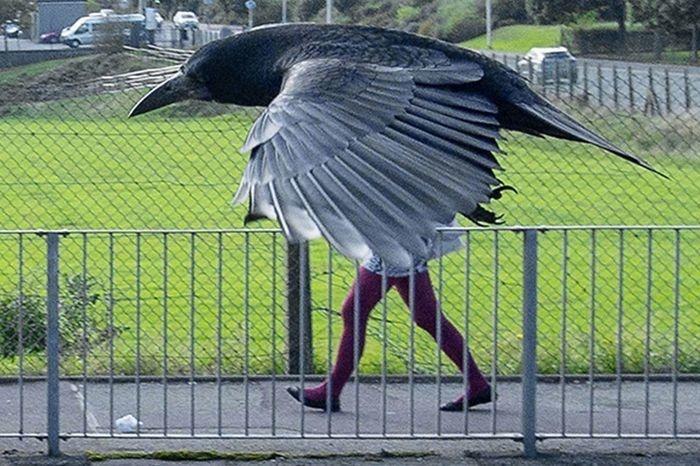 14. Гибрид человека и птицы.