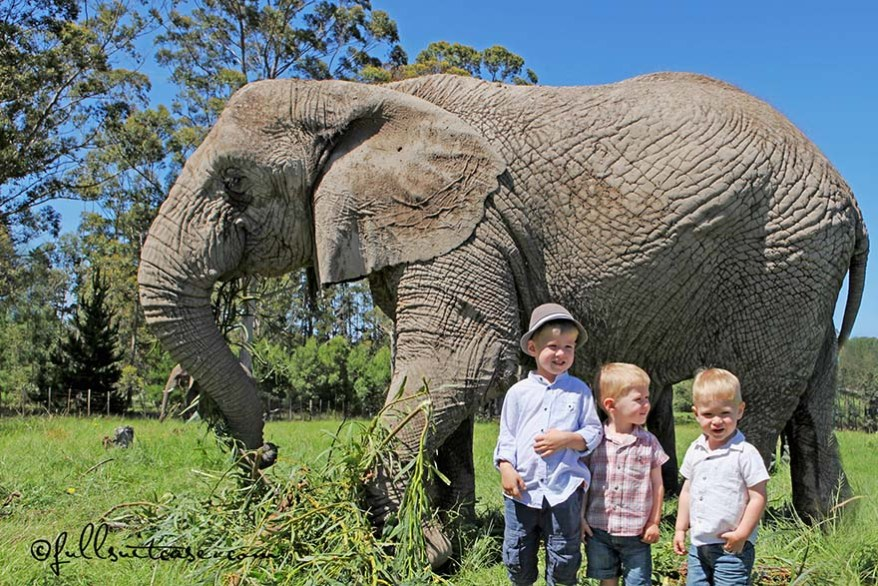 travel South Africa with young children