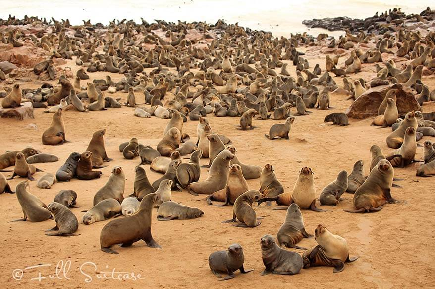 Cape Cross Seal Colony Namibia