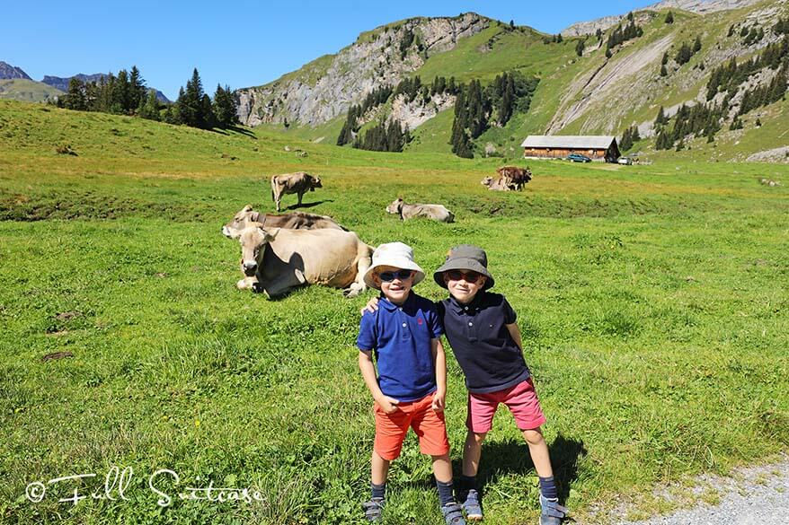 Kids hiking in Switzerland amidst Swiss cows