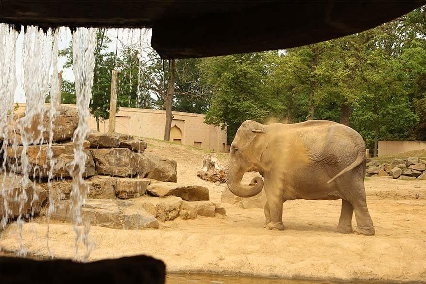 Elephants in Planckendael