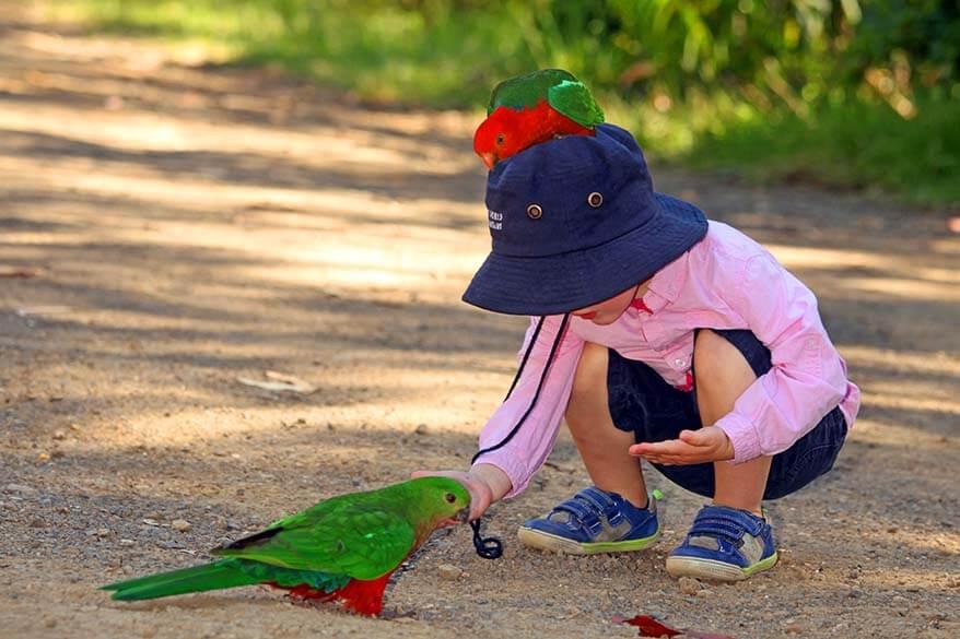 Kids feeding parrots - Great Ocean Road Australia
