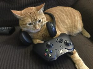 Cat with a headset around it's head in front of a game controller