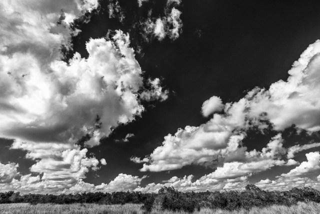 Sawgrass-Clouds-and-Hammocks-Shark-Valley-Evergldes-National-Park-RKing-15-003554BW-vv