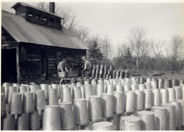 Cleaning the sap buckets after sugaring season