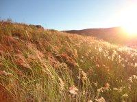 Una fotografía de un bello campo iluminado por el sol