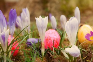 Easter flowers bigger
