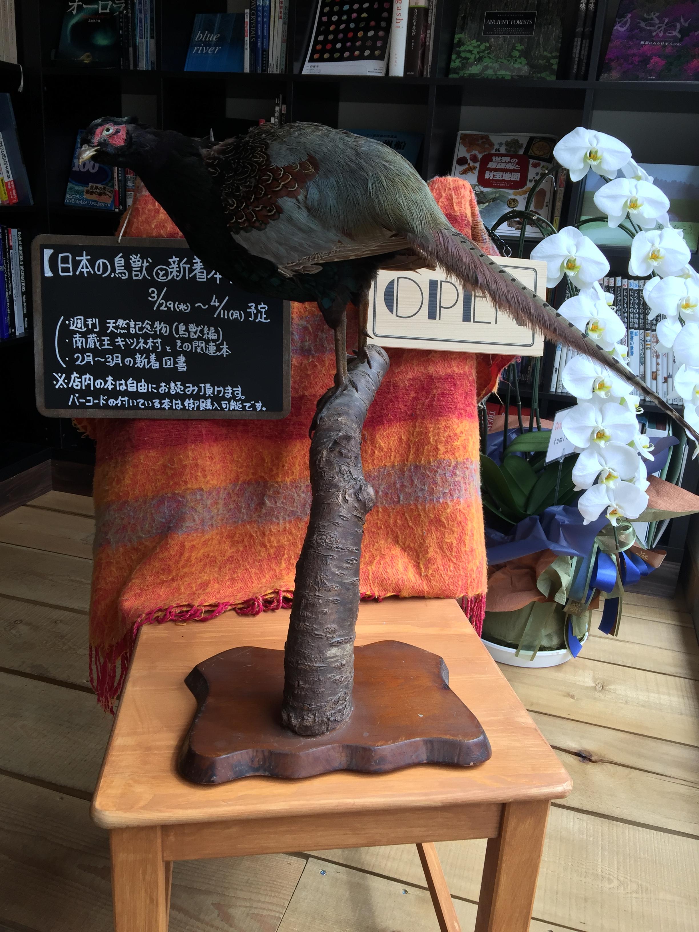 日本の鳥獣と新着本フェア