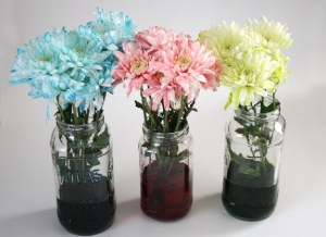 fun science rainbow flowers experiment fin dreamalittlebigger