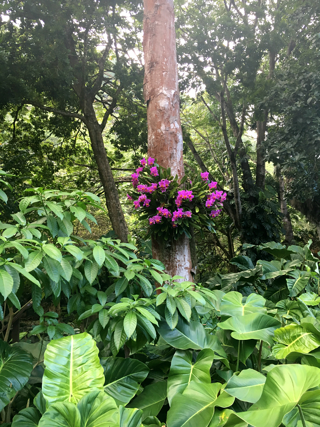 Things to do in Waimea Valley