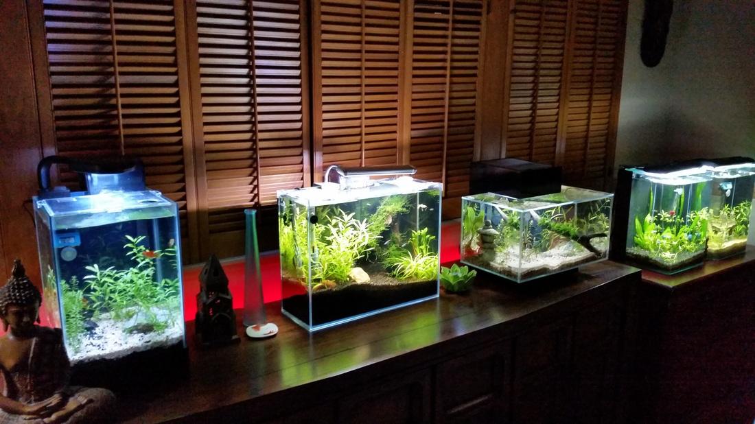 fun aquariums home