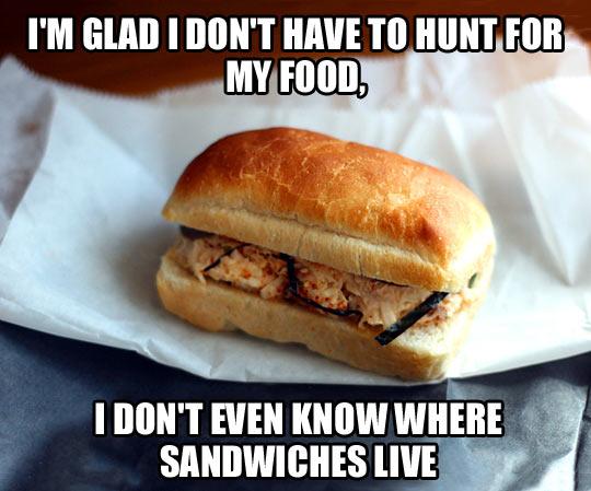 funny-sandwiches-food-hunt-human
