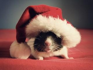 Cute-And-Small-Christmas-Animals-Fluffy-Christmas-17-320x240