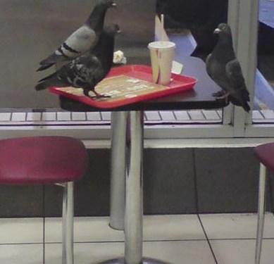 Serious bird meeting