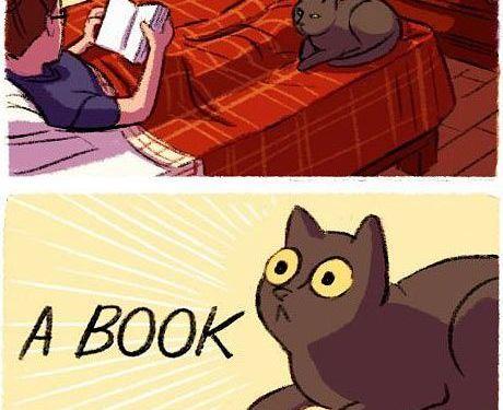 Books, the other catnip…