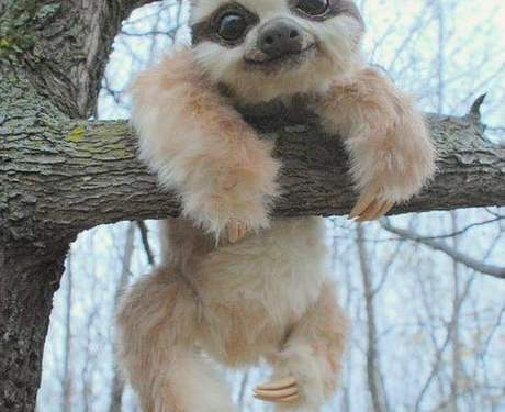 There are not enough baby sloths on here….