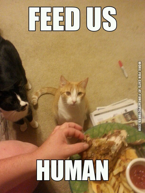 Human Archives Page 3 Of 4 Fun Cat Pictures