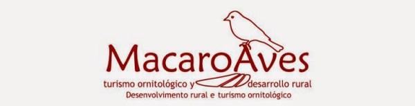 macaro-aves