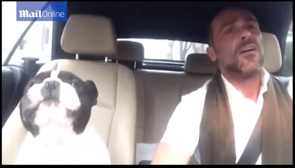 Bulldog francês canta com o seu dono