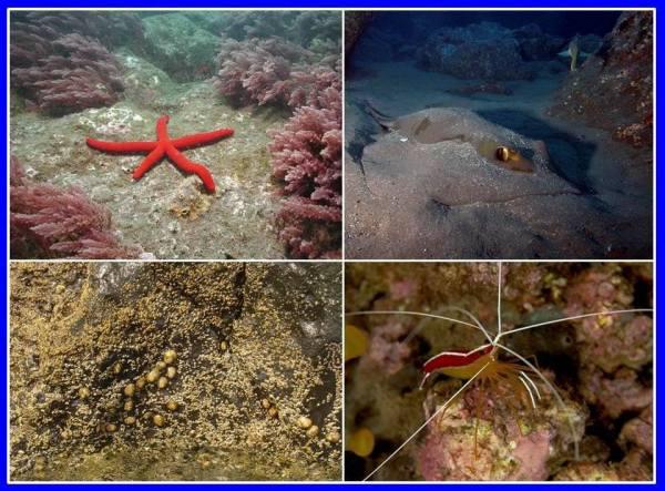 Mundo subaquático madeira2