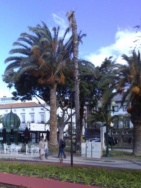 palmeira praça do povo