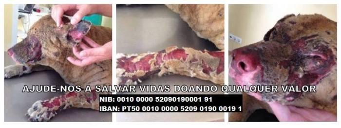 Ajuda Alimentar a Cães