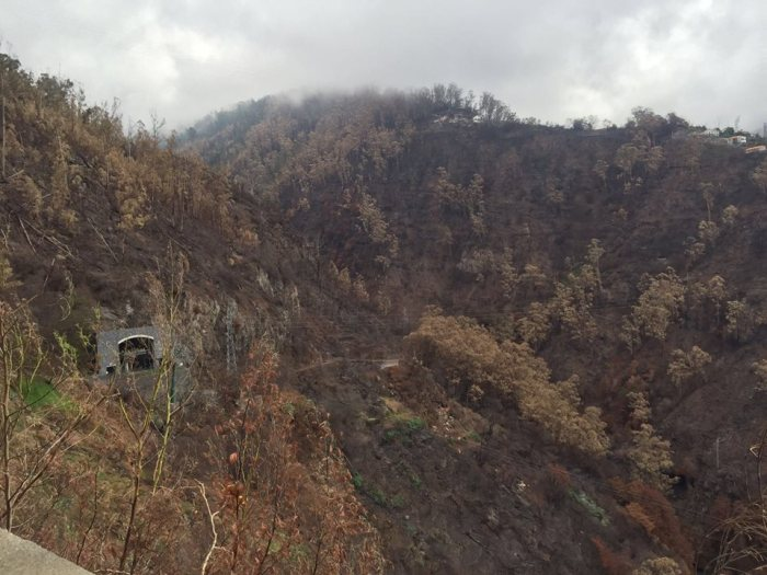 corina cretu rubina leal sérgio marques incêndios fogos