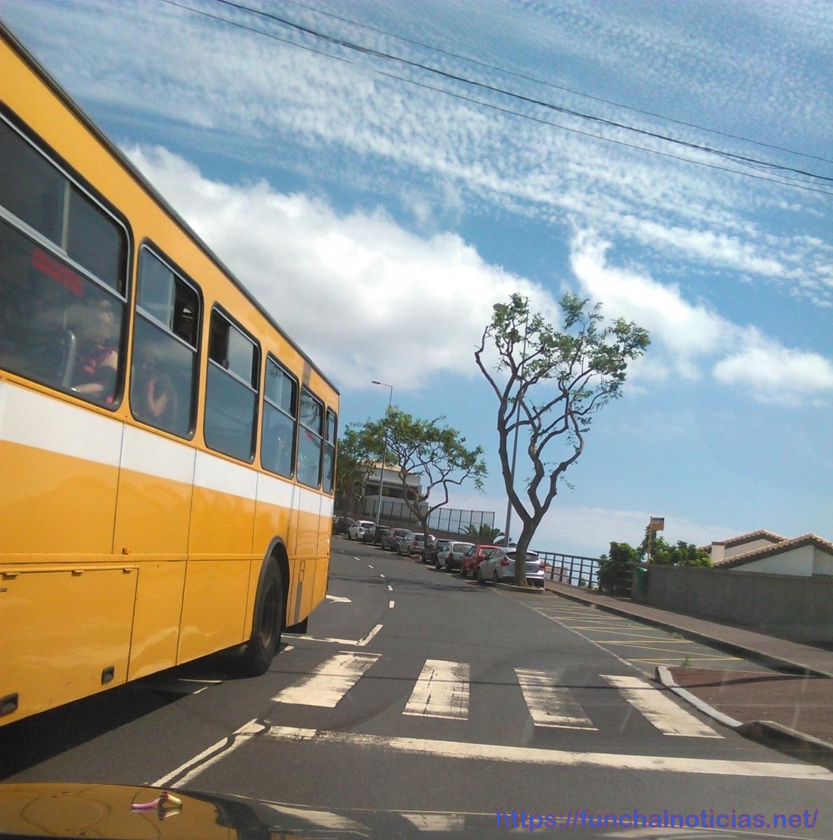 "Novo corte de árvores ""a rente"" gera perplexidade na Avenida Santiago Menor"