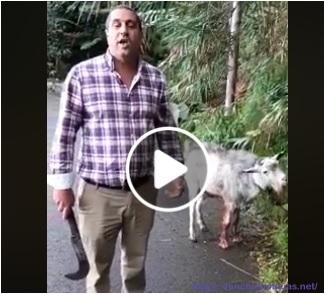 MPT apresenta cabra como nova cantoneira da Câmara de Machico (vídeo)