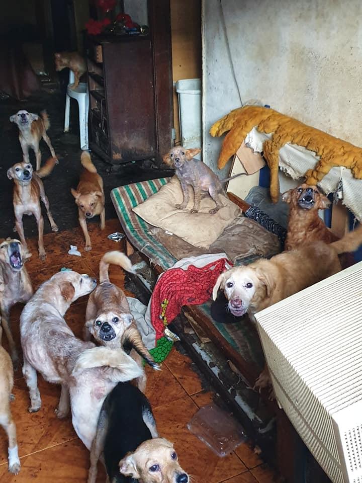 Veja o vídeo de resgate dos 32 animais de uma casa na Rua 31 de Janeiro [vídeo]