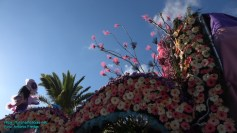 festa-flor-2019-199