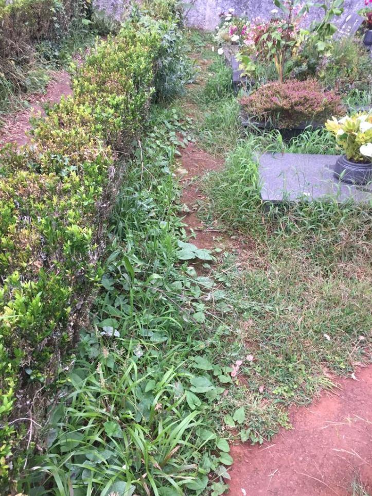 Santo da Serra cemitério C