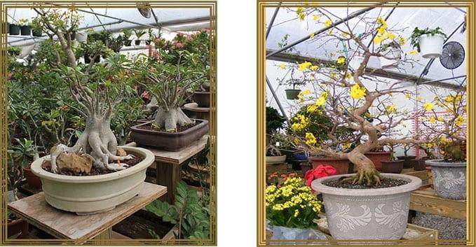 Tea Garden Nursery Arlington TX