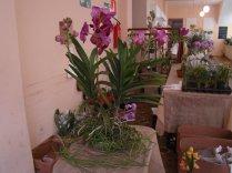Exposição de orquídeas do Orquidário Lumani (foto Agnaldo Montesso 09-10-2018) (10)