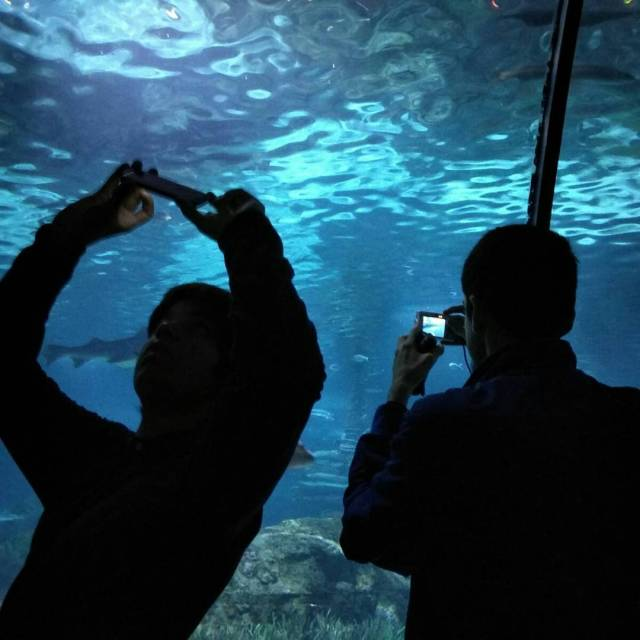 Fascinats a laquari de Barcelona grupPerseu casalFriends aquariBarcelona autisme aspergerhellip