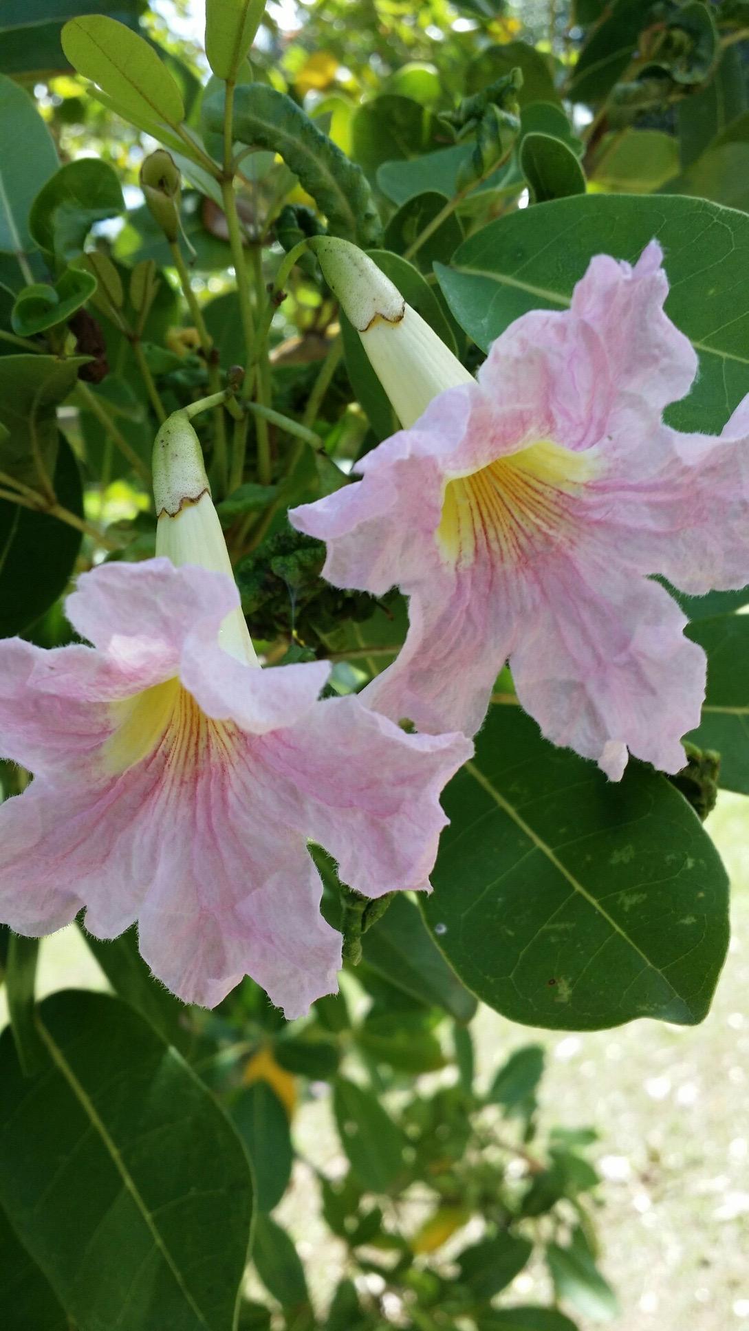 Cuida tus Senos cual Delicada Flor