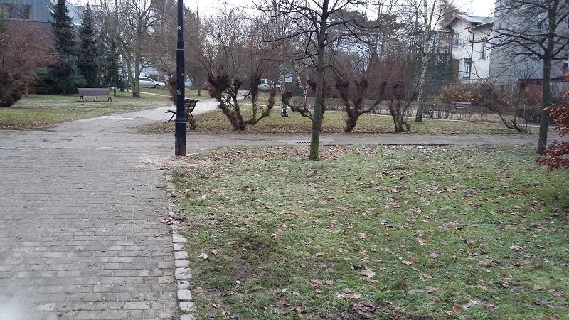 ogród społecznościowy - park przy urzędzie miasta sopot - propozycja miejsca