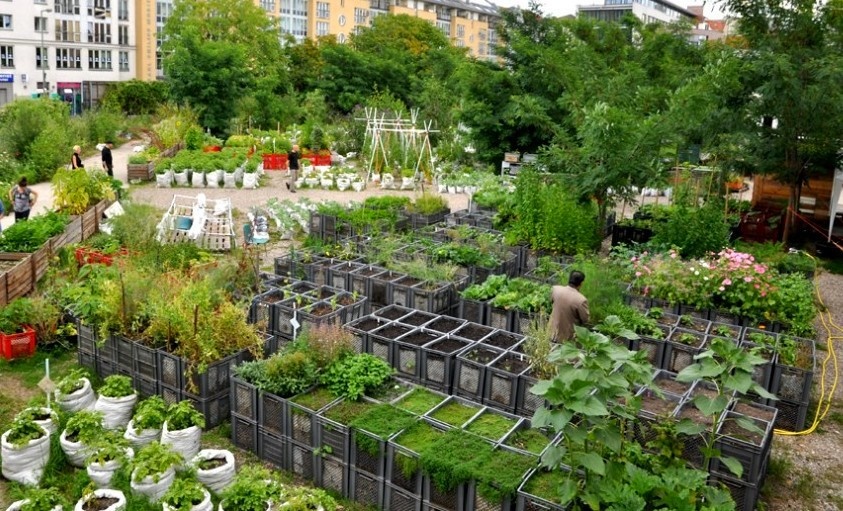 ogrody społeczne w berlinie