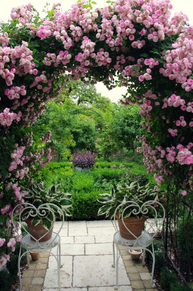 różana altana w ogrodzie pracowni sztuki ogrodowej, która zaprojektuje nasz ogród społeczny w Trójmieście