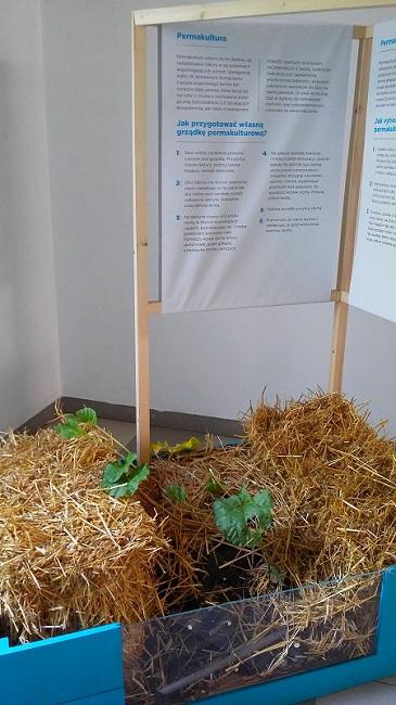 permakultura w skrzynce - ogród społeczny w Cieszynie