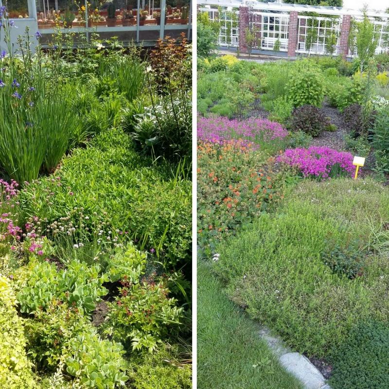 ogrody kapias - byliny - fragmenty rabat