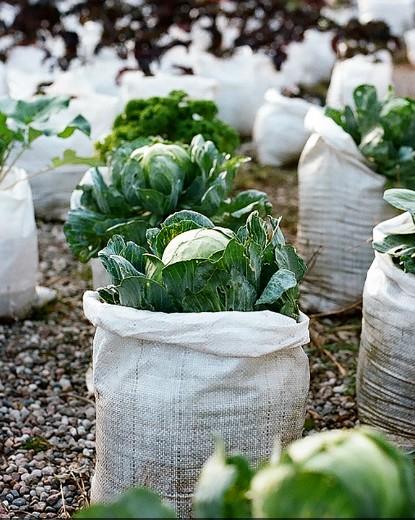 worki uprawowe do pomidorów i kapusty ogród społeczny