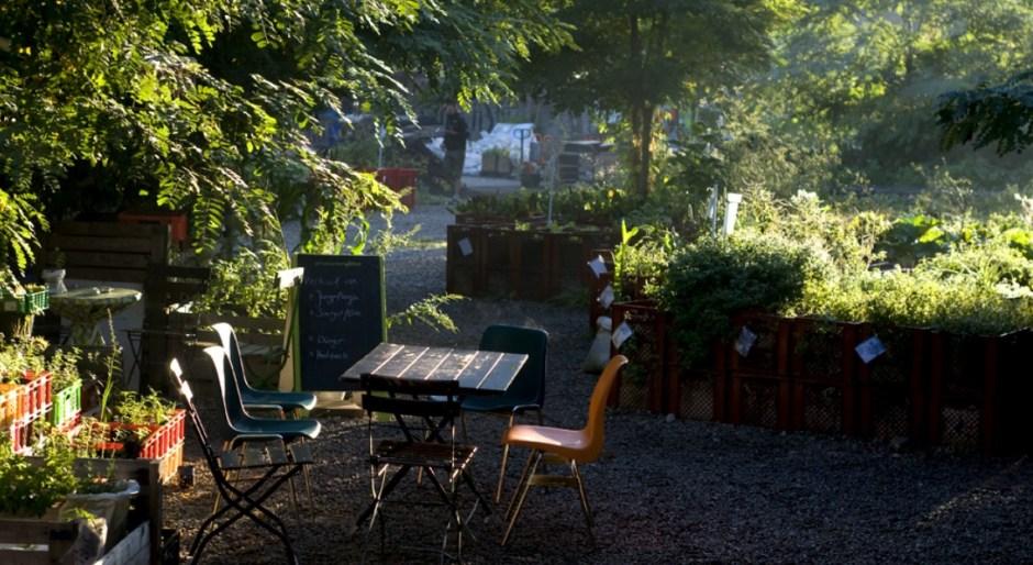 bistro lunch eko bar w ogrodzie społecznym