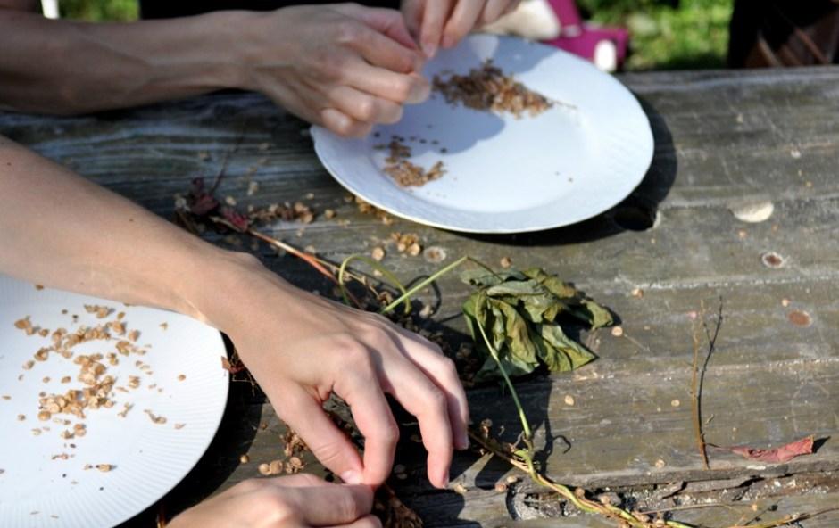 pozyskiwanie nasion warzyw do własnej hodowli