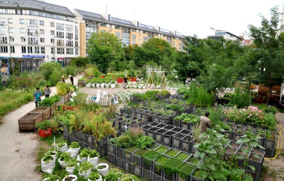 ogród społeczny w Berlin Kreuzberg - rośliny rosną w skrzynkach i workach