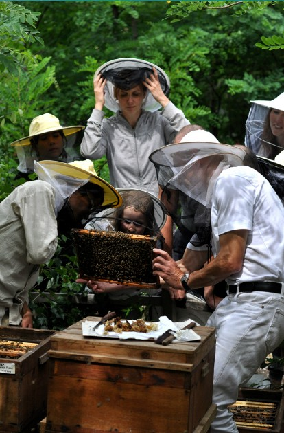 pszczoły ule w ogrodzie