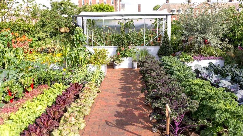 warzywnik jako ogród ozdobny - ogrody londyn chelsea 2017