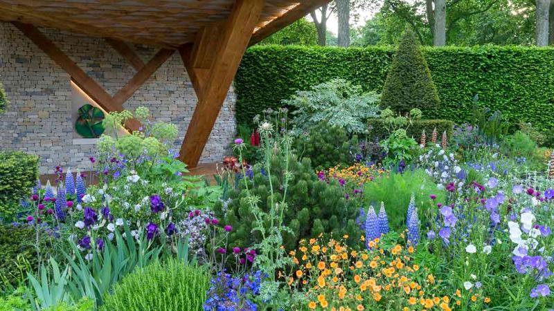 dwukolorowy ogród kwiaty niebieskie i pomarańczowe
