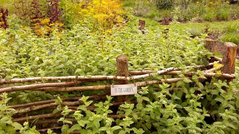 płot z gałęzi, płot z patyków, ogród ziołowy